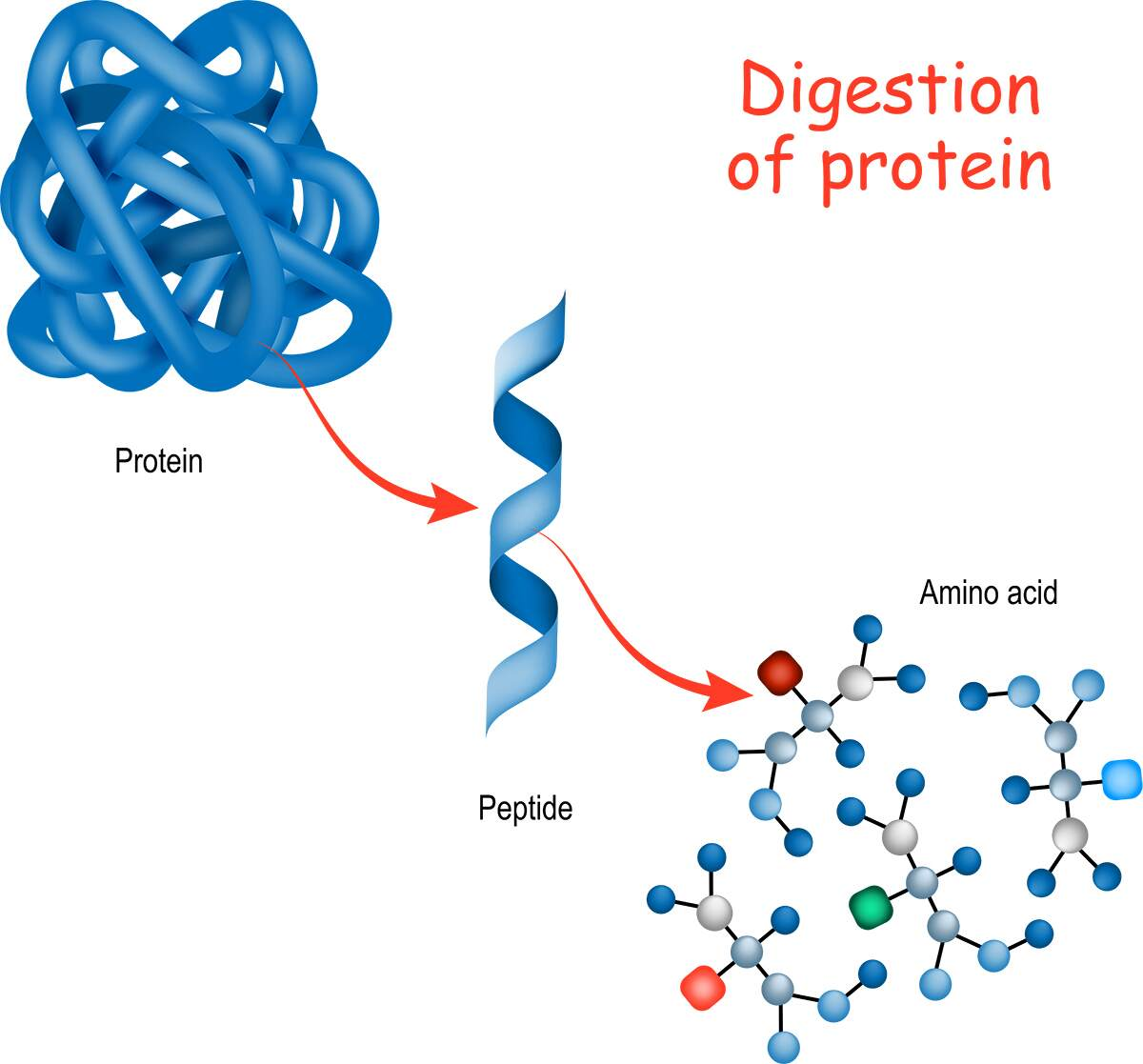 Zoomer Peptide Protein
