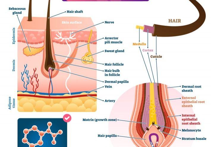 Hair Follicle Drug Test-min