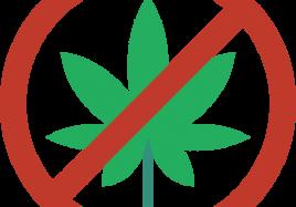 No Marijuana-min